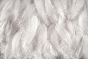 Feathers and Down Filling for Those Like Fluffy Pillows with a Wee Bit of Support